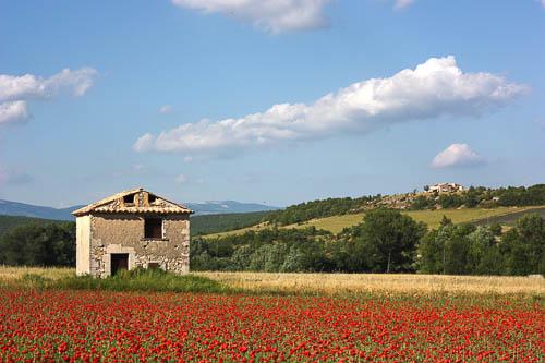 environnement naturel du domaine cassan en Provence : coquelicots et collines