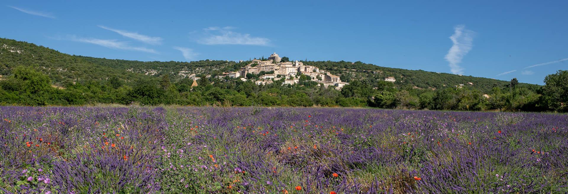 La vue du Domaine Cassan sur le village perché de Simiane La Rotonde dans le 04 avec ses champs de lavande en fleur